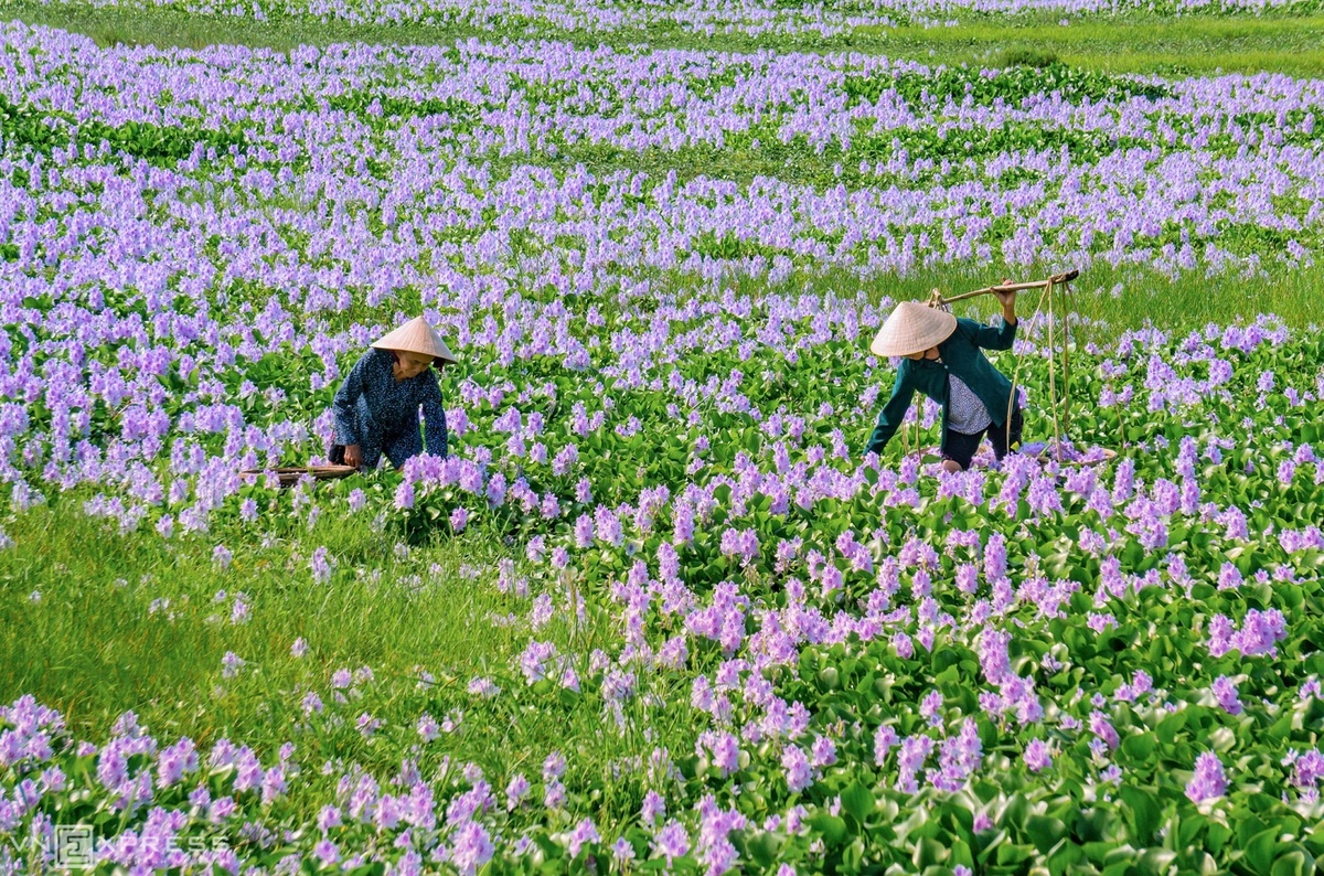 The beauty of countryside in Quang Nam