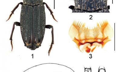 Scientists discover new species of insects in Vietnam