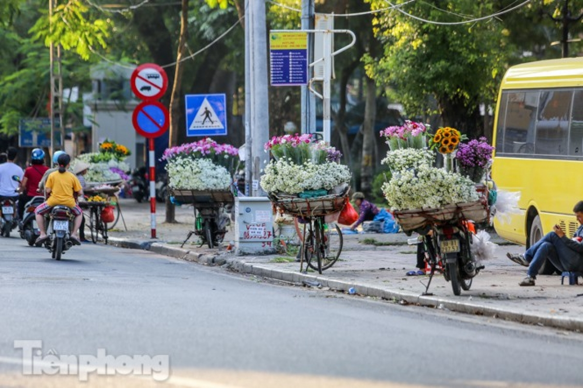 The flowers can easily be found on streets throughout the capital city such as Phan Dinh Phung, Thuy Khue, Thanh Nien, and Nguyen Dinh Thi.
