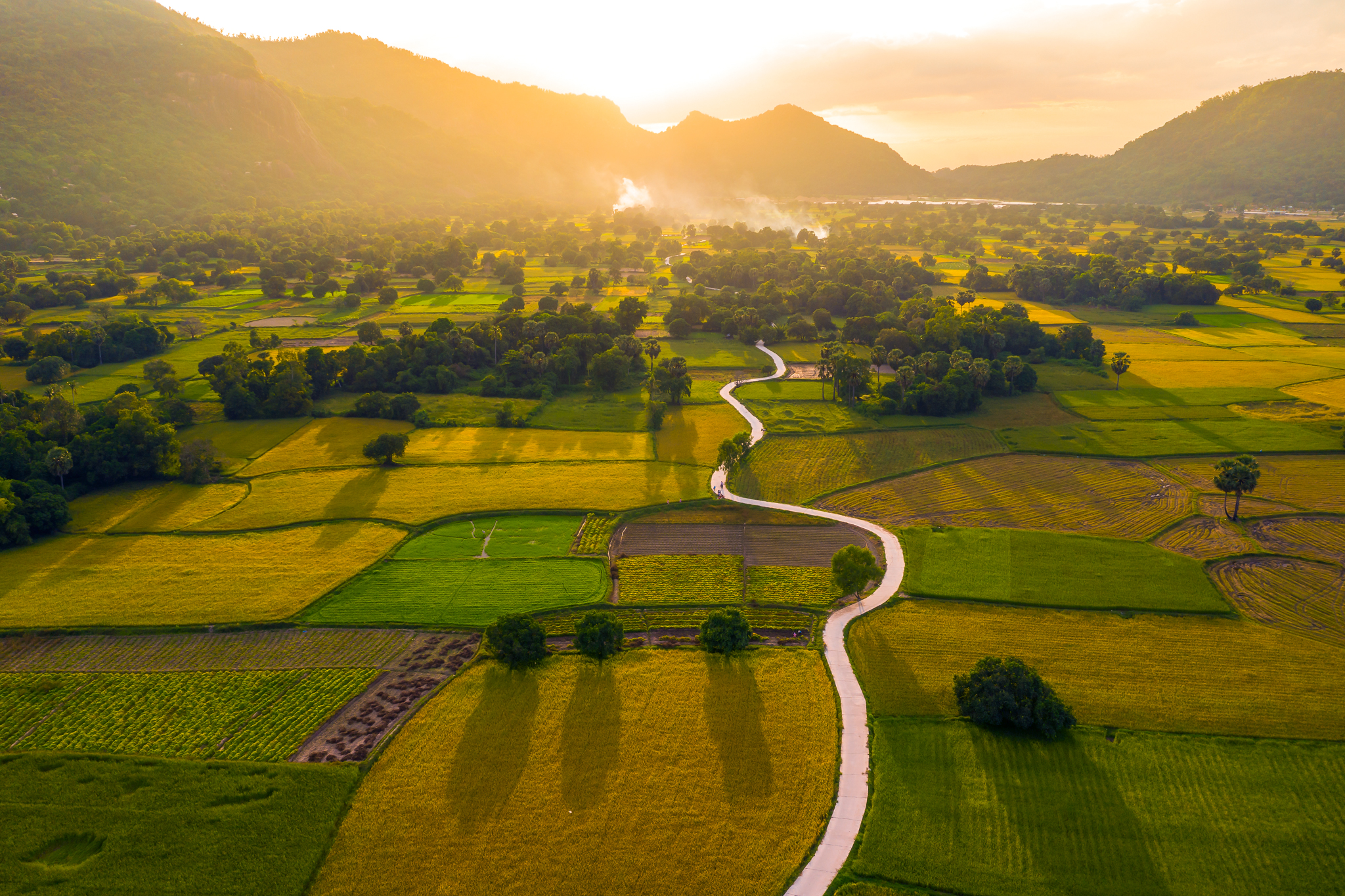 A photo shows Ta Pa paddy rice fields in the Mekong Delta province of An Giang